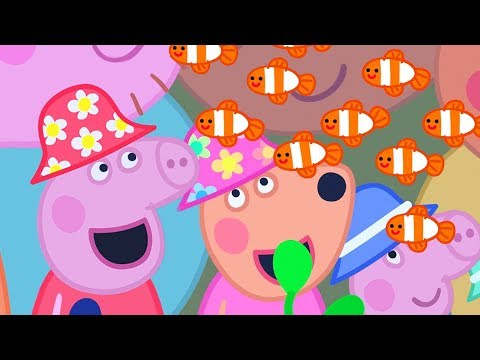 Peppa Pig English Episodes | The Great Barrier Reef | Peppa Pig Official