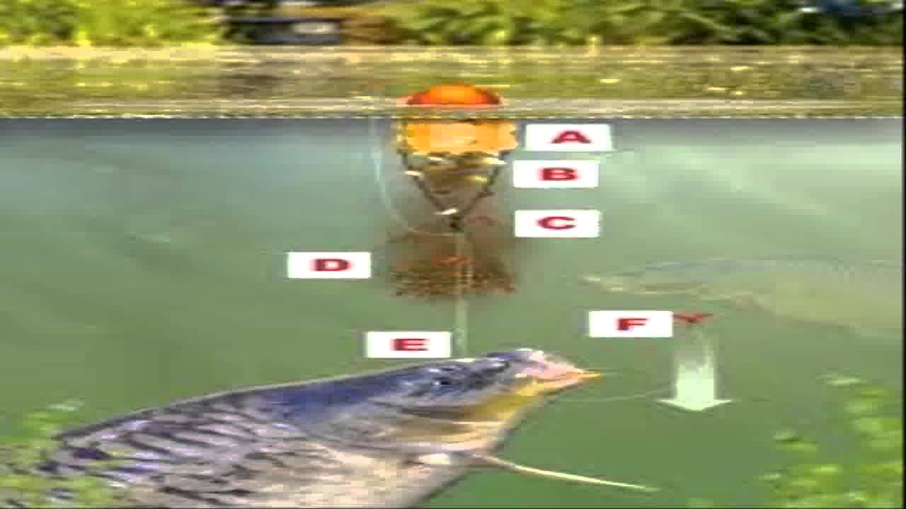 Best carp rigs carp fishing tactics youtube for Carp fishing tips