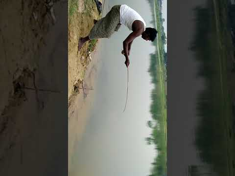 Special 10kg fish with gouribati special Man  Samra mondal