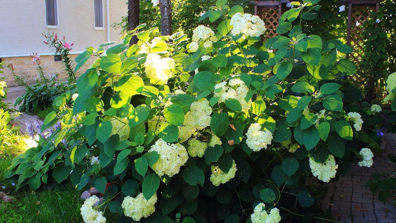 Viburnum derivat din paraziți. Cum să scapi de paraziți în organism în Krasnodar