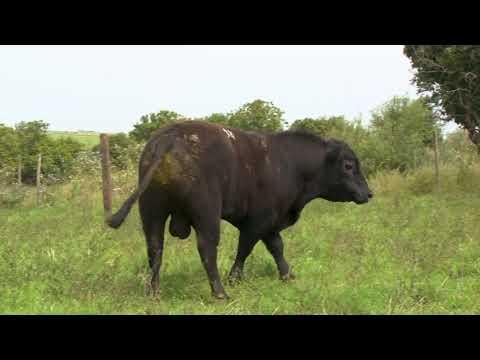 LOTE 31 - TAT 38TE - ZAMBEZE