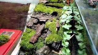 Terrarium Setup: Salamanders & other amphibians || Terrarienaufbau: Feuersalamander