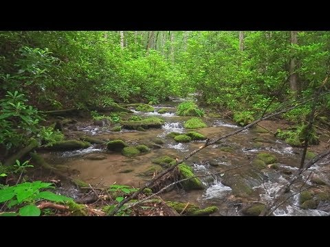 DVD: Trout Streams Of Great Smoky Mountains NP - NC