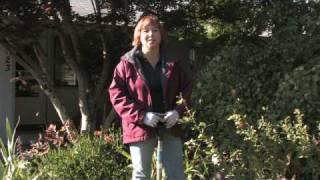 Gardening Tips : How to Fertilize Daylilies