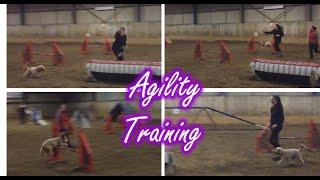 Dog Agility Fun 26 - Cockapoo Training