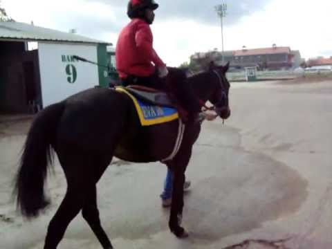 Satoshi's Daemon - Fair Grounds Race Course - Walking to the track.
