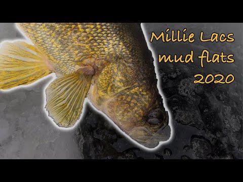 Mille Lacs (MUD FLATS 2020)
