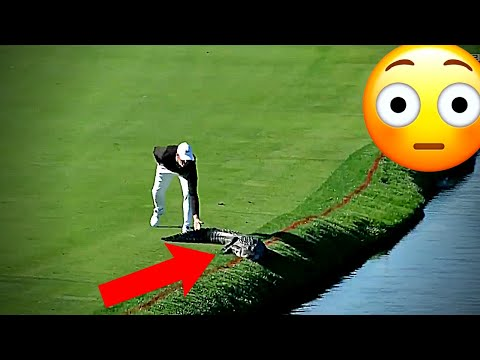 Most Unexpected Animal Interference Moments in Sports – Funny Invasions & Interruptions (New)