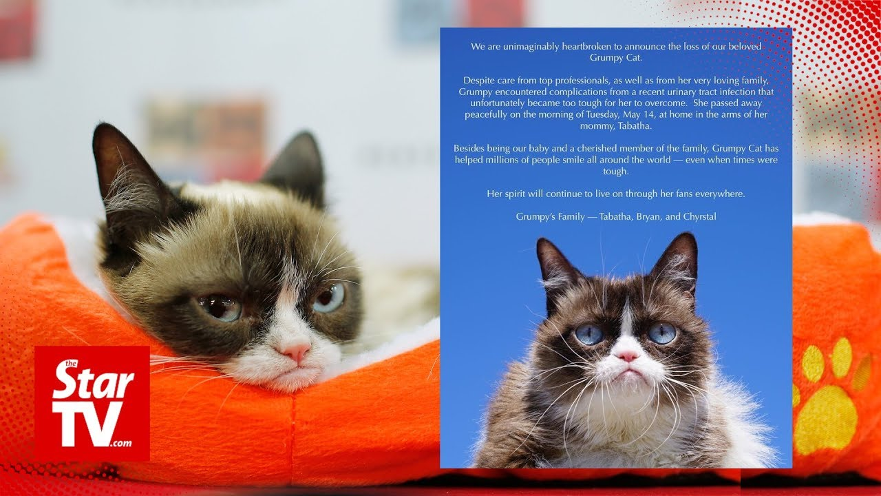 Internet-famous Grumpy Cat passes away at age 7