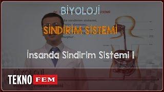 ygs lys bİyolojİ İnsanda sindirim sistemi 1