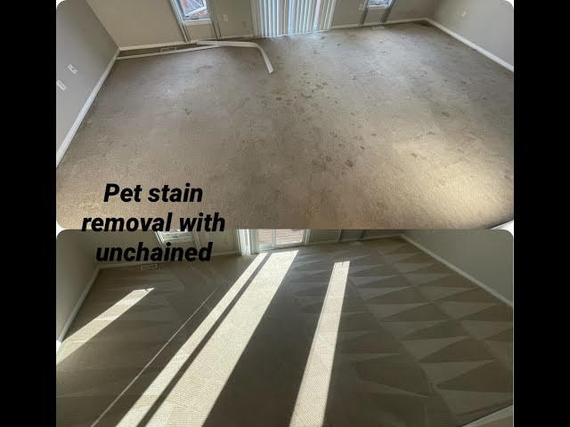 Removing pet stains with Unchained from TMF
