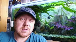 Meine Aquarien nach dem Urlaub, kleinere Missgeschicke und interessante Ausblicke.