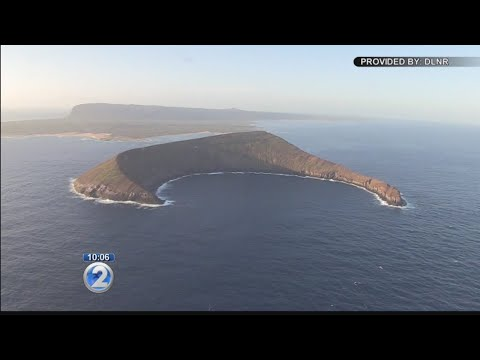 State plans to use pesticide to eradicate rat population on Lehua Island