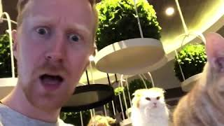 Foreigner discovers cat cafe! 🐱 猫カフェを見つけちゃった外国人!