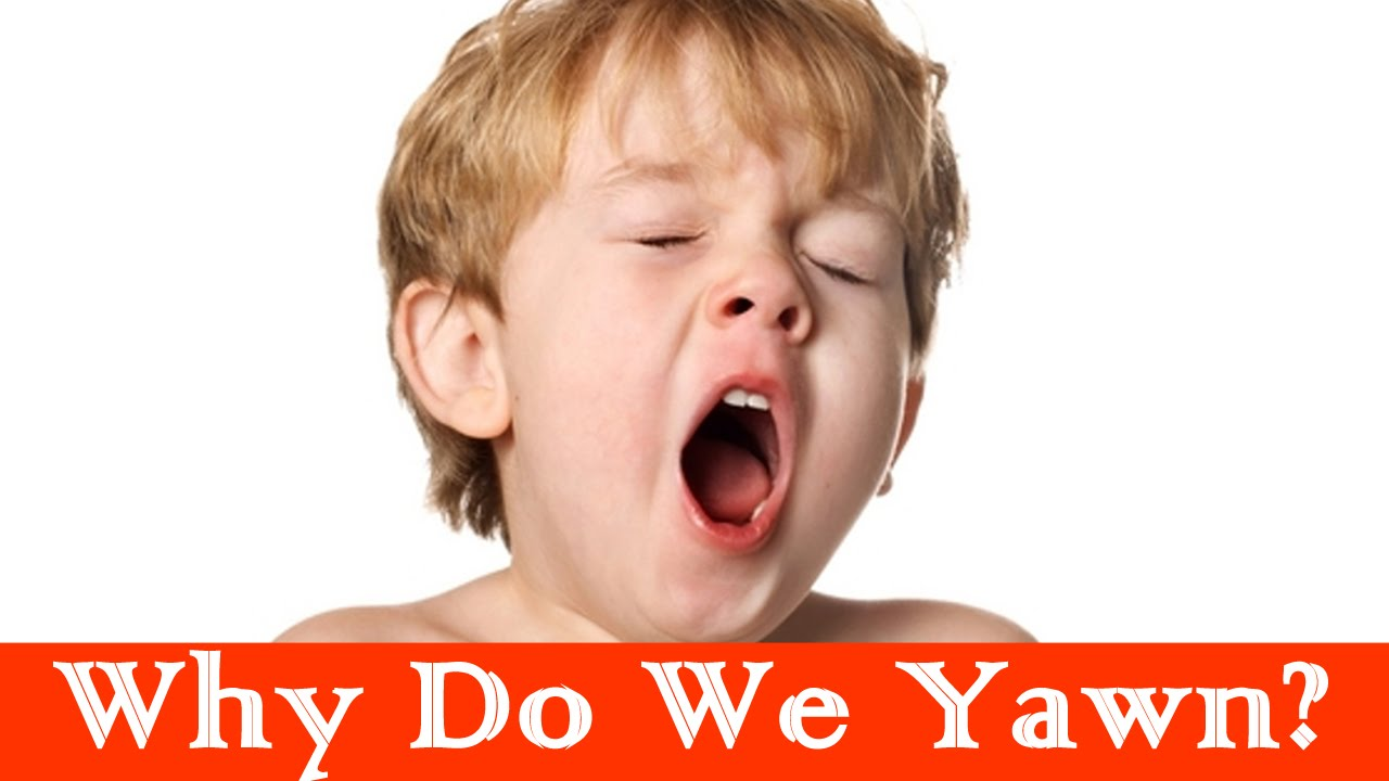 Image result for why do we yawn