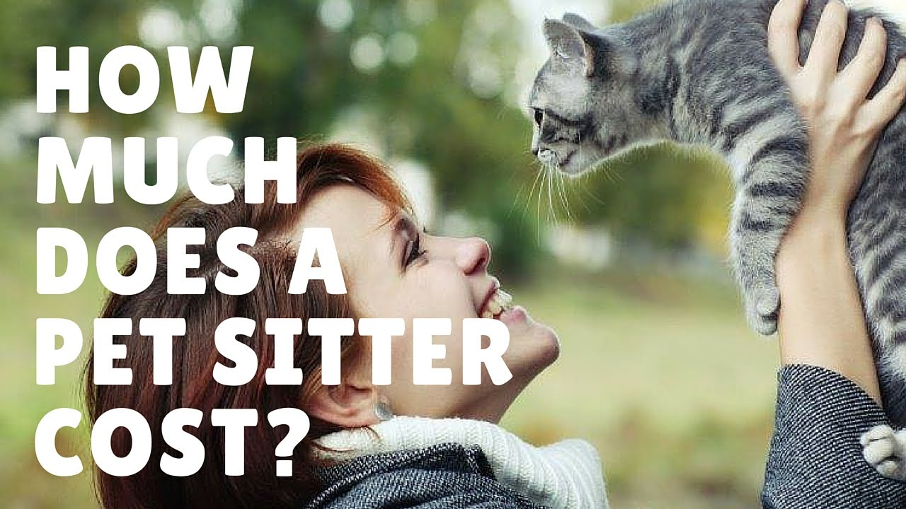how much does a pet sitter cost youtube. Black Bedroom Furniture Sets. Home Design Ideas
