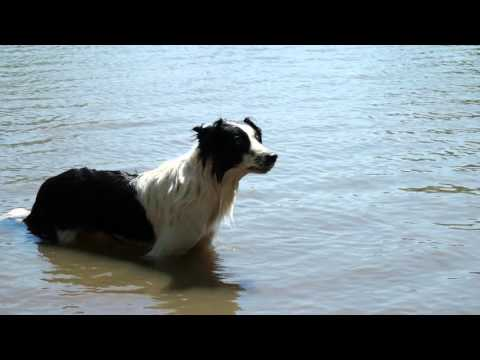 Border Collie Chester, Tales with Tails, Episode 1, 4k Ultra HD
