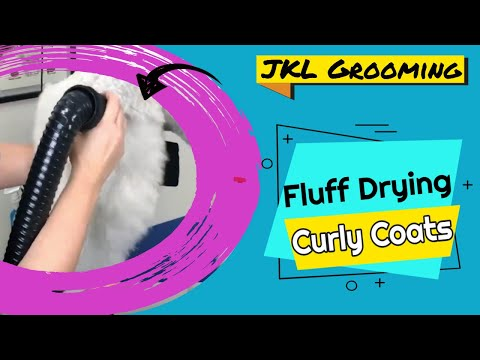 Fluff Drying & Straightening a Curly Coat - JKL Grooming
