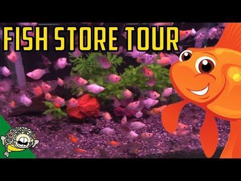 Fish Store Tours #6 Pau Pau! Fish Store in Japan. Asian Fish Store. Fish Store Aquarium Shop in Asia