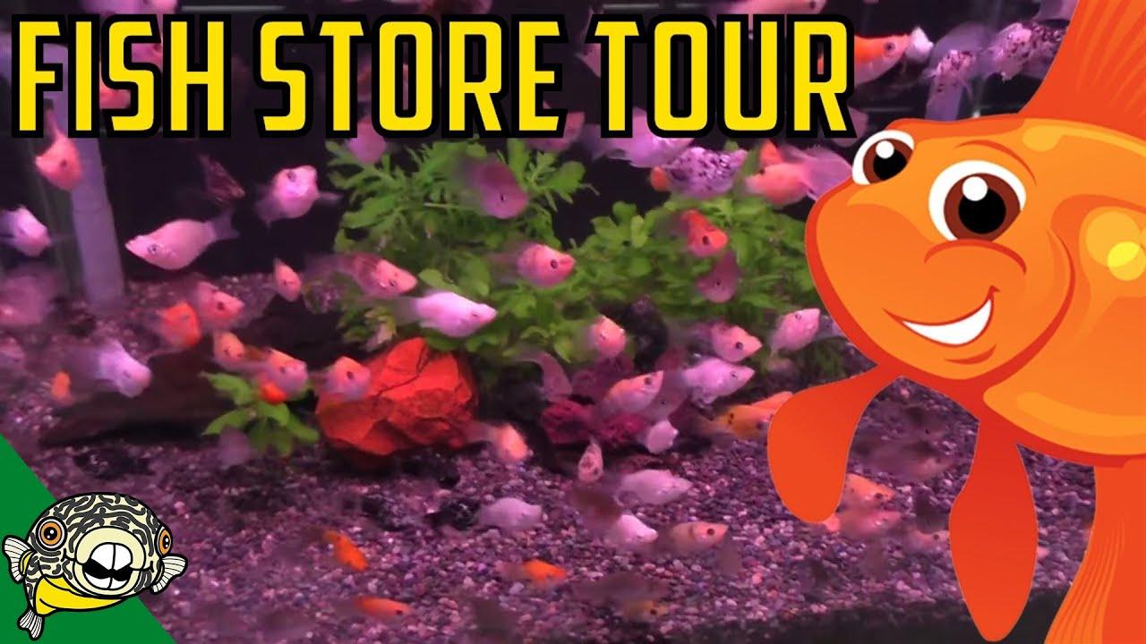 Fish Store Tours 6 Pau Pau Fish Store In Japan Asian Fish Store