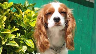 Köpek Eğitimi & Köpek Oteli ( Öğrencilerimiz )