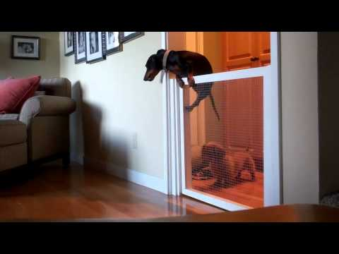 Wiener's Great Escape!