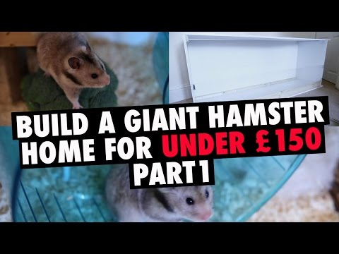 How To Build A Giant DIY Hamster Cage - Part 1