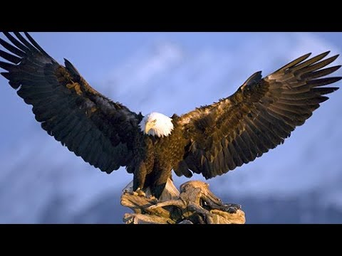 New Documentaries 2017 / AMERICAN EAGLE Doc. 2017 / hQ films