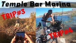 Lake Mead Fishing: Temple Bar Trip 3 & 4  Fishing With Subscribers & Catching Turtles???
