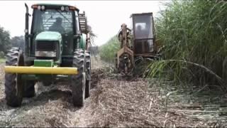 Sugarcane planting in Louisiana
