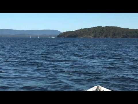 Shark sighting in Lake Macquarie Feb 14th 2016. *Language Warning*