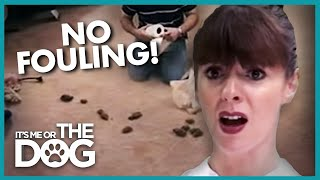 Dogs Can't Stop Pooping on the Carpet | It's Me or the Dog