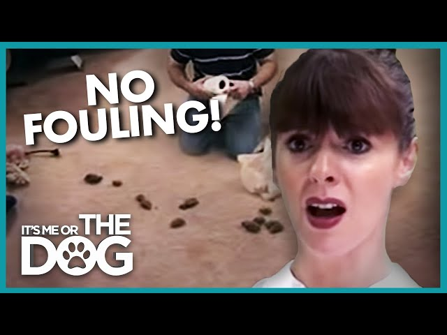 Dogs Cant Stop Pooping on the Carpet | Its Me or the Dog