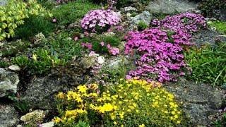 видео Альпинарий своими руками, растения для альпинария