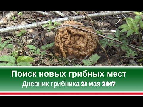 Вопрос: Карта грибных мест Башкирии какая, где найти Грибные места в Уфе какие?