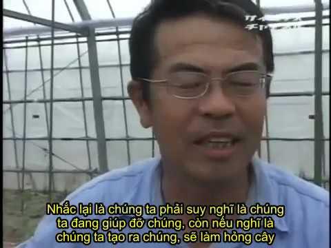 """(Việt sub) Kỹ thuật trồng cà chua """"sống"""" ngon theo phong cách Nhật Bản"""