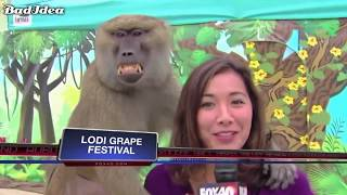 EMBARRASSING FAILS & Funny Moments Caught On Live TV Funny Live TV Fails Reporter Fails Compilation