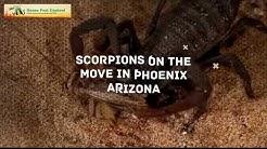 Scorpion Control Casa Grande AZ Exterminator 480-493-5028 Ozone Pest Control