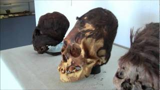 Royal Red Headed Elongated Skull Family Of Paracas Peru