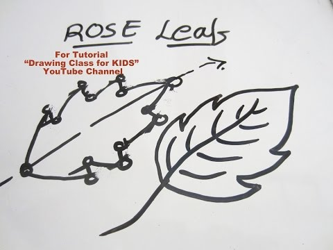 How to Draw- Tips & Tricks for ROSE LEAF Step by Step