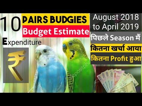 10 Budgies Pairs Budget Estimate Season August, 2018 - April, 2019 कितना खर्चा कितना Profit हुआ