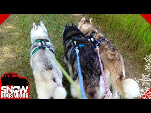 Alpena Adventure Dogs | Fresh Takes Contest | Alpena Michigan