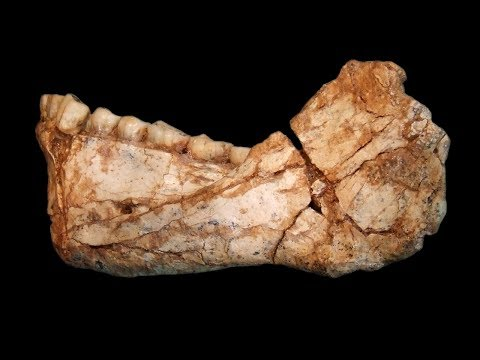 The oldest Homo sapiens fossils at Jebel Irhoud, Morocco