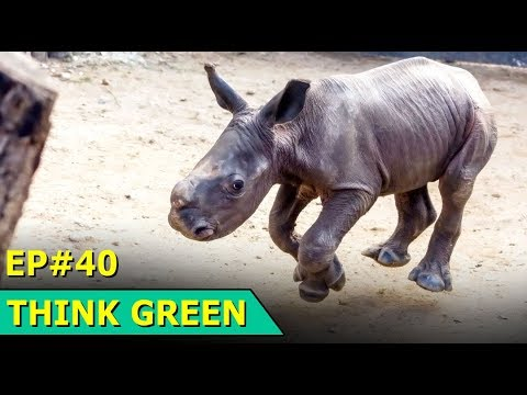 Flame Analysis | Solar Car | Wildlife Rehabilitation | Think Green : Episode 40