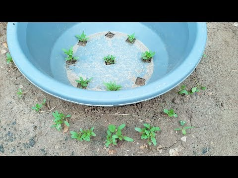 Save Water Growing Vegetable Plants idea For Kitchen Gardening at Home