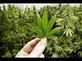 Marijuana company buys entire town, plans pot paradise