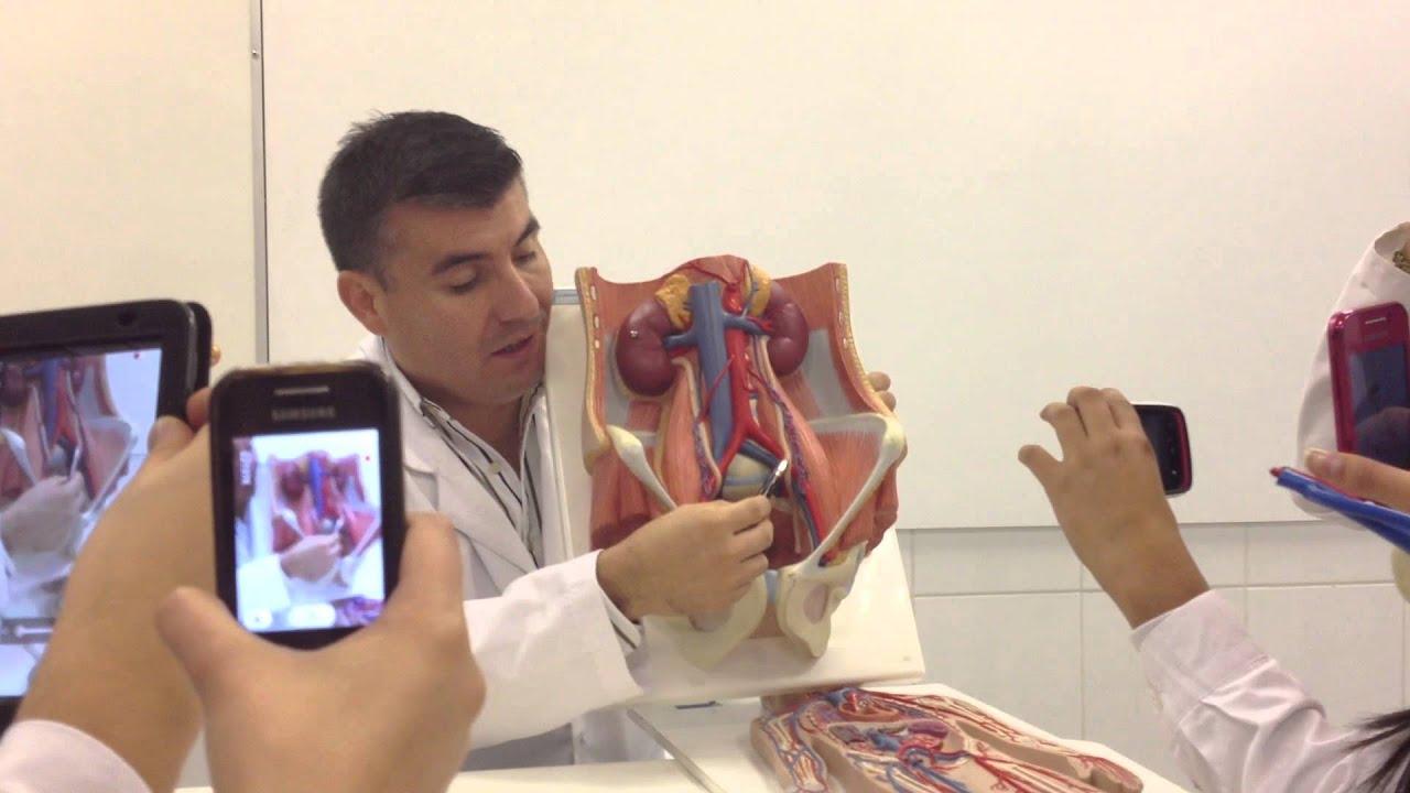 Clase Anatomia Sistema Circulatorio - YouTube
