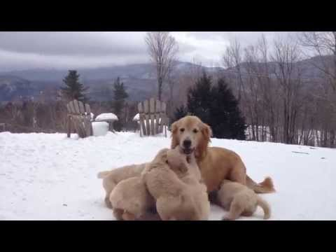 Don't Be Sad, Watch These Puppies Play Instead