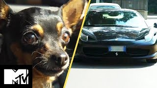 The Dog That Drives Ferraris | The Rich Dogs Of Instagram Ep 1