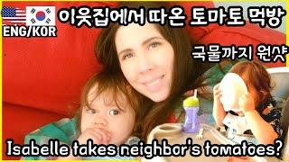 토마토 따는 미국엄마 한국아빠와 아기/국제커플/미국 일…